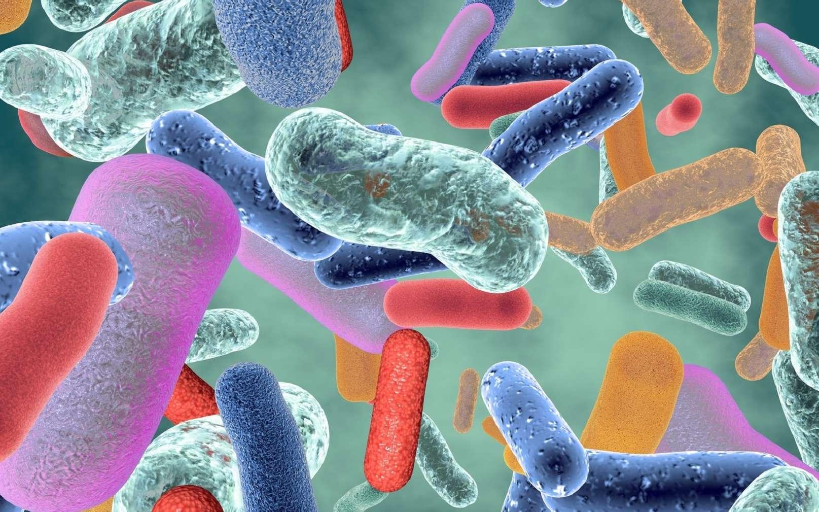 Les généralités sur le microbiote