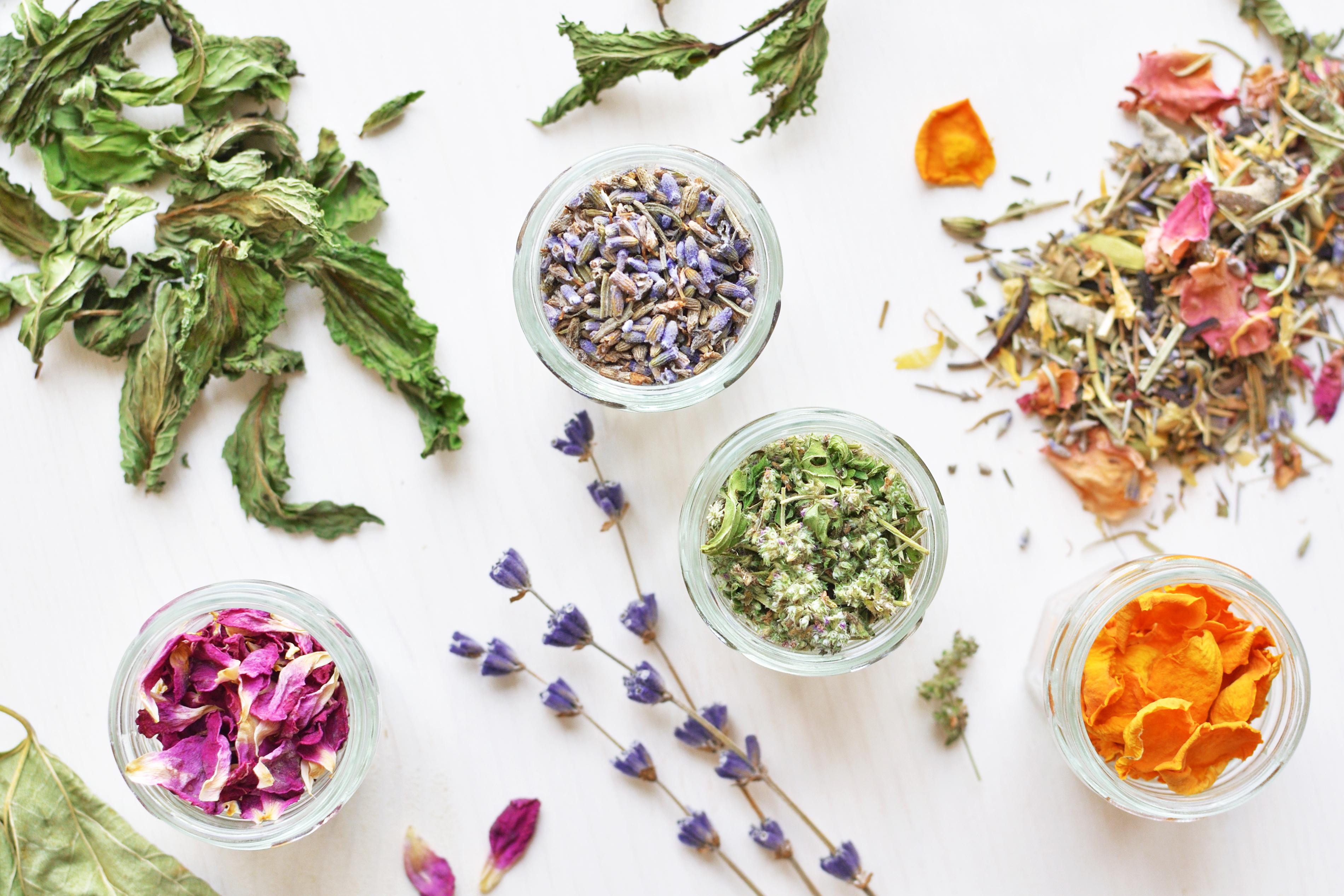 Détox : les plantes les plus efficaces