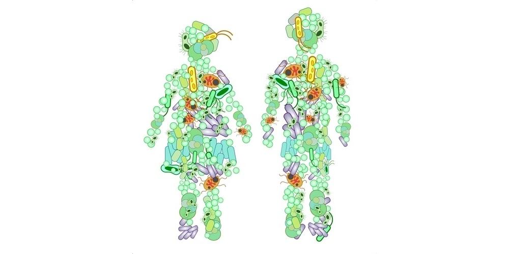 Microbiote intestinal et gestion du poids